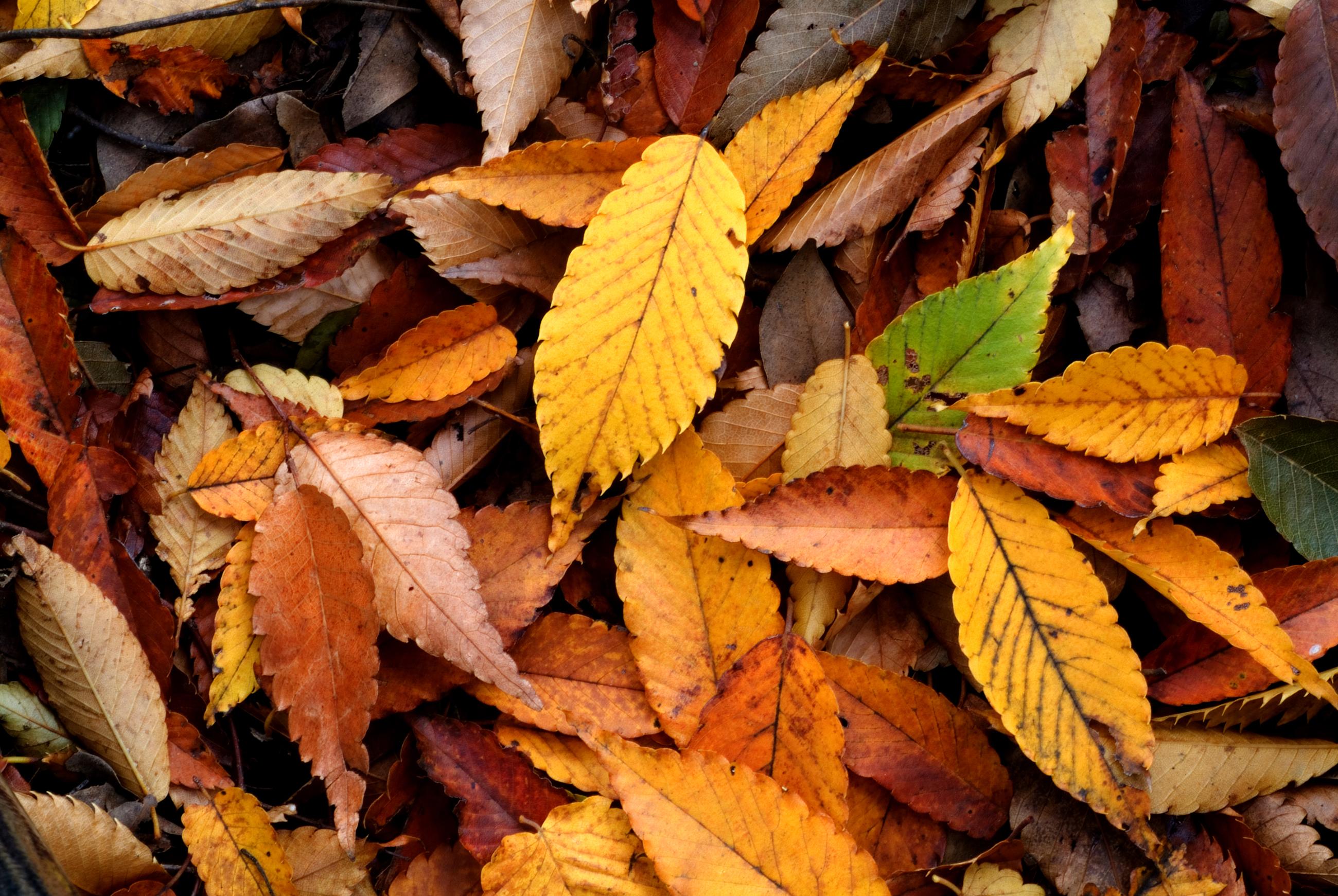 All About Autumn Gardening | Minigarden US