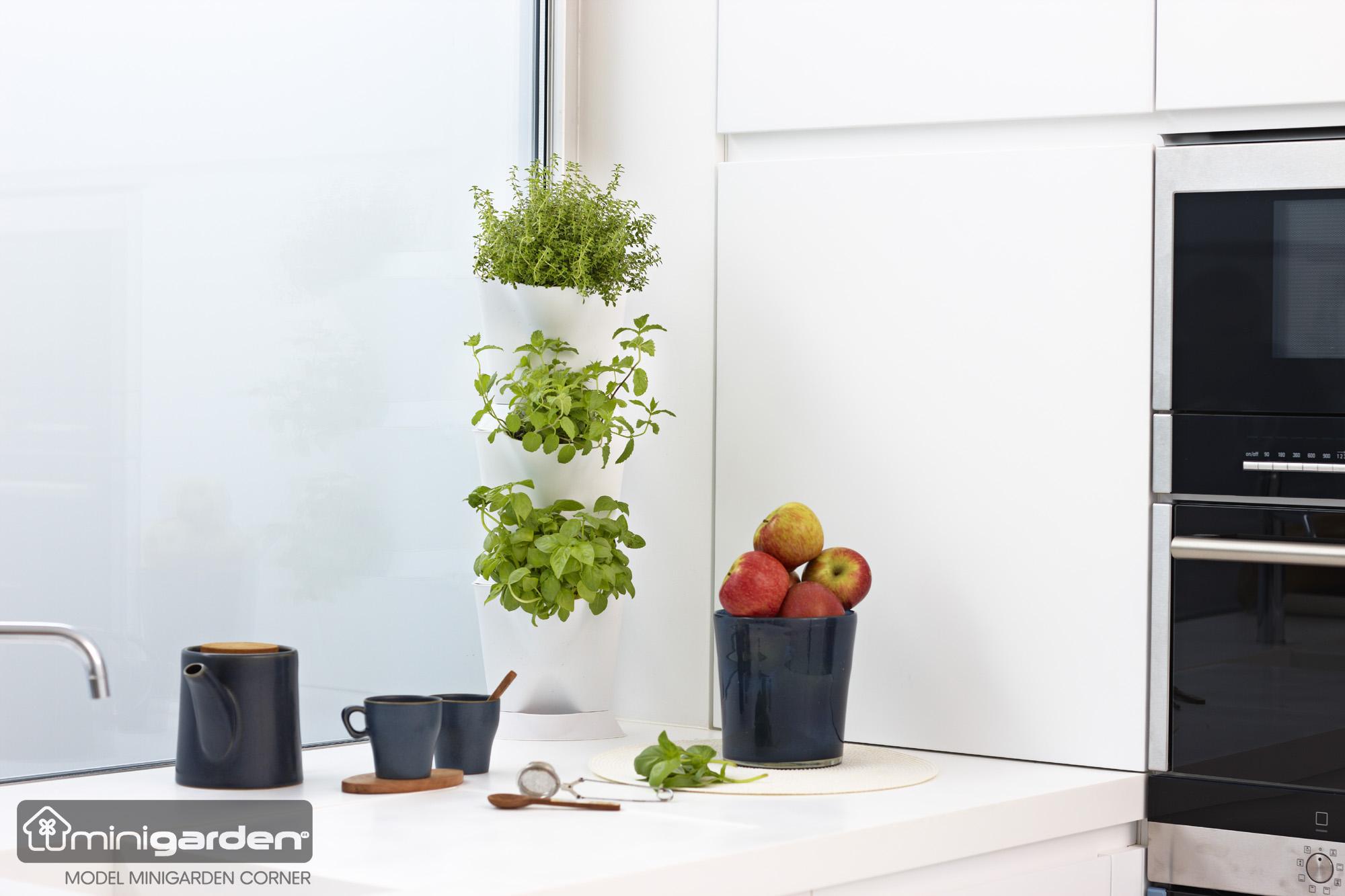 minigarden-corner-7