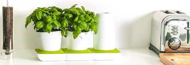 Minigarden Basic Countertop Basil