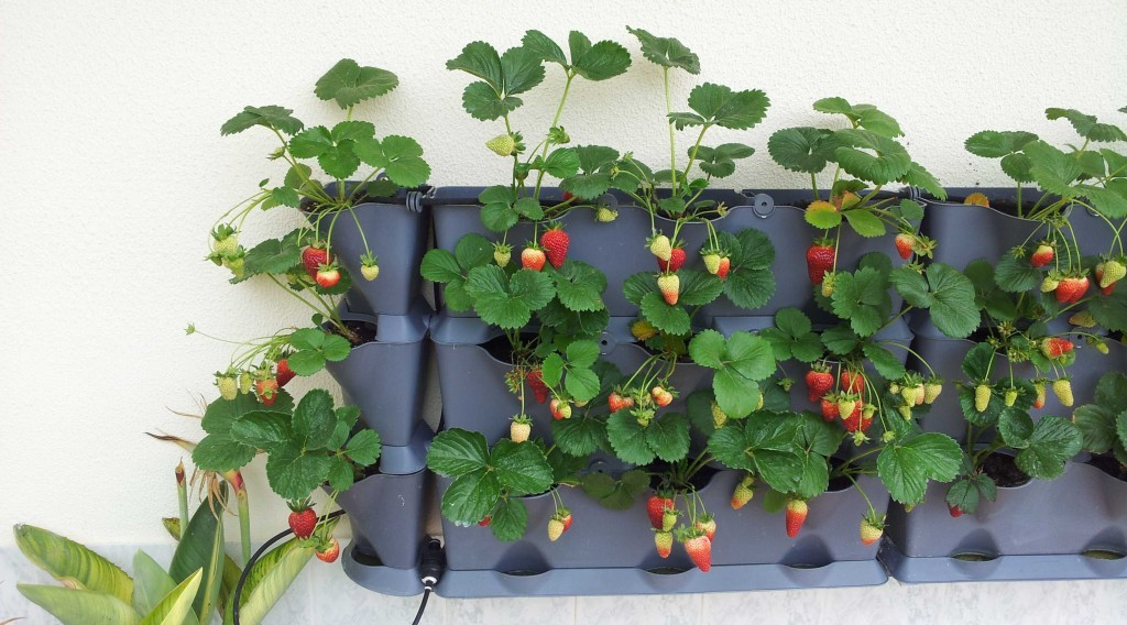 Mounted Minigarden Vertical Strawberry Garden