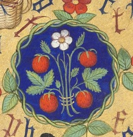 Strawberries Illuminated Manuscript