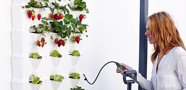 Watering Strawberries